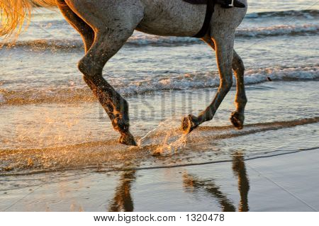 Galloping On The Waters Edge