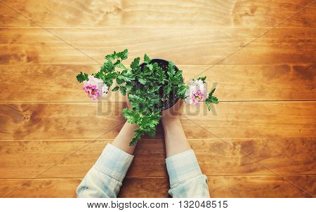 Person Holding A Potted Flower On A Rustic Table