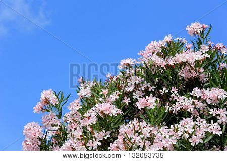 Nice flowers bush against blue sky background