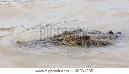 Crocodile close up in Adelaide River, Kakadu, Australia