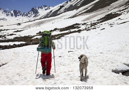 Hiker with dog in snowy mountains at spring. Turkey Kachkar Mountains (highest part of Pontic Mountains).