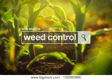 Weed control in internet browser search box maize field in background