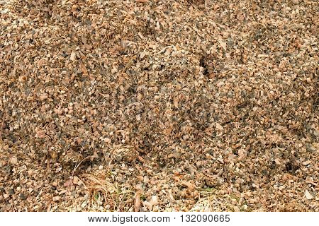 Corn Maize Silage Milled As Animal Feed. Waste From Corn Shelling Process