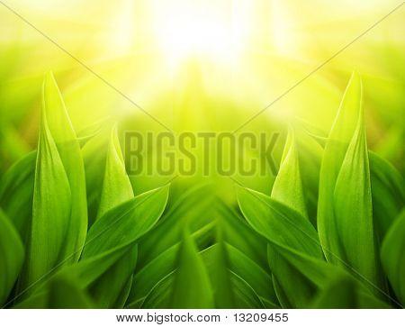 Fresh green grass (shallow DoF)