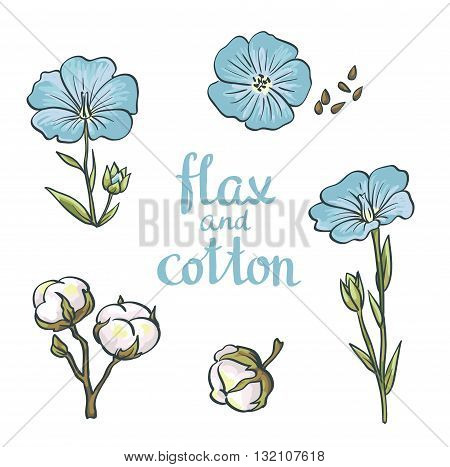 Hand drawn flax and cotton. Vector design isolated on white background