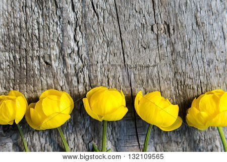 yellow Globe flowers on a wood background