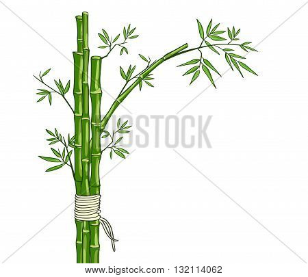 Bamboo green background. Vector hand drawn card.
