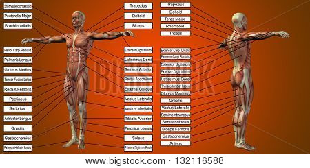 3D illustration of a concept or conceptual human man anatomy and muscle for sport and text on red background