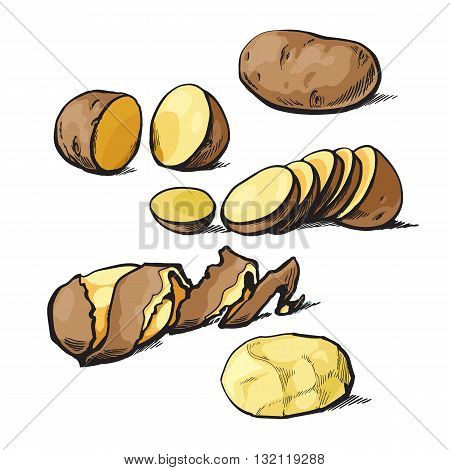 Set of cleaning potatoes and cut, vector sketch hand-drawn illustration isolated on white background, cut potato tubers, shelled the potatoes, peel and cut into slices