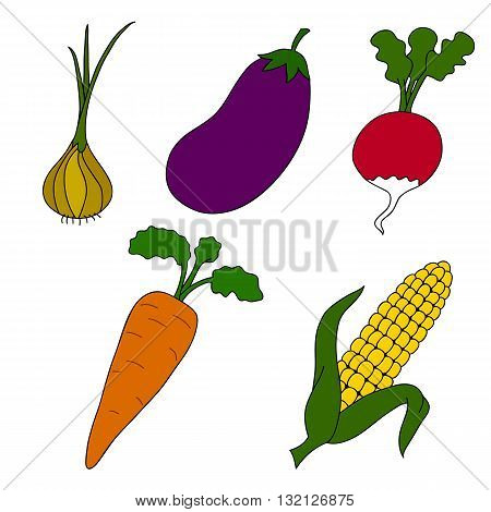 Ripe vegetables on a white background. Vector.