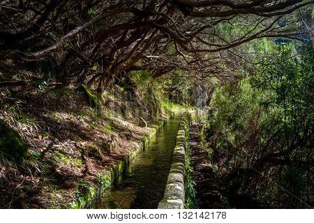 Water stream and mystic forest at popular hiking route levada 25 fountains Rabacal. Madeira island, Portugal. poster
