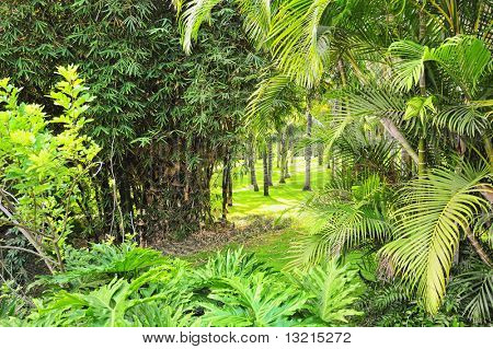 Picture of a tropical forest background