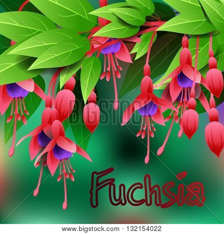 Beautiful spring flowers Fuchsia. Cards or your design with space for text. Vector illustration