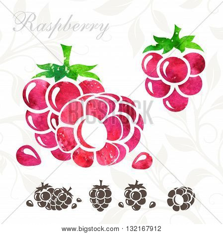 Raspberry icons set. Raspberry illustration with watercolor texture