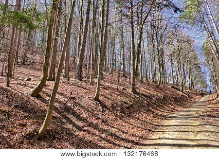 Autumn forest in Gaderska dolina at Slovakia