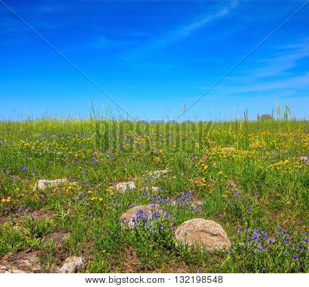 Scenic carpet of spring flowers and fresh grass. Israel. Legendary Golan Heights in a beautiful sunny day