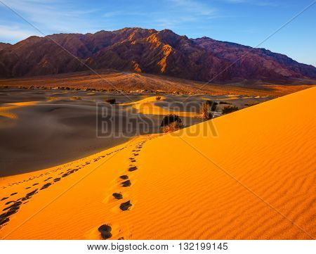 Chains of animals and people should be covered dunes. Early morning in Mesquite Flat Sand Dunes, California