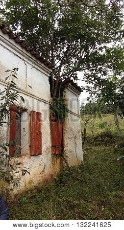 Natureza em perfeita adaptação com arquitetura de uma casa abandonada