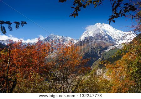 Red leaves behind the snow-capped mountains, blue sky, shaded by the pure