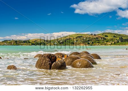 Unusually large and spherical Moeraki boulders lying along the beach on Otago coast New Zealand. These formations are a major tourist attraction of the area.