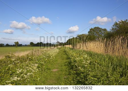 Wildflowers Beside A Canal Towpath