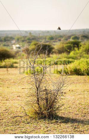 Bird Flying Over Tree