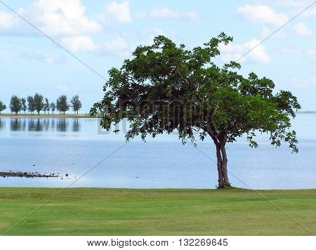 Distant casuarina trees reflecting on shallow lagoon water