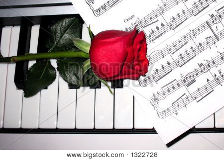 Rose With Piano