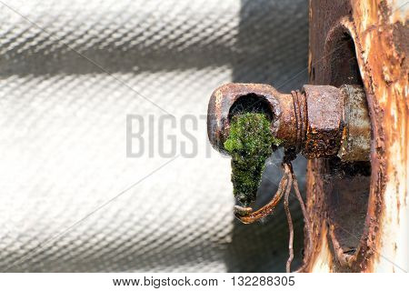 From old rusty pipes (broken faucet) is dripping water. The tube is overgrown with green moss and algae.