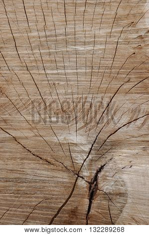 close up of wood cut surface with radius crack