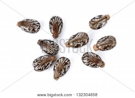 Castor beans on white background seed nature