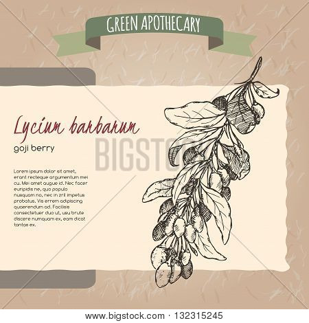 Lycium barbarum aka Goji berry sketch. Green apothecary series. Great for traditional medicine, or gardening.