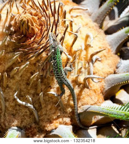 Close Up Of A Lizard On A Cycas