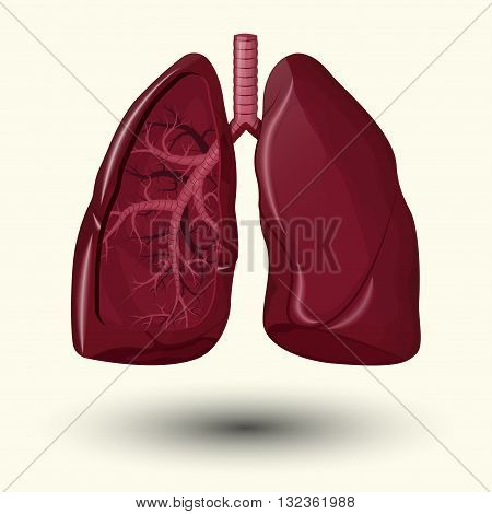 Human lungs emblem, Human lungs icon, Human lungs sign, Human lungs illustration, Human lungs cartoon style, medicine, clinic symbol flat design, cancer diagnostics center, vector