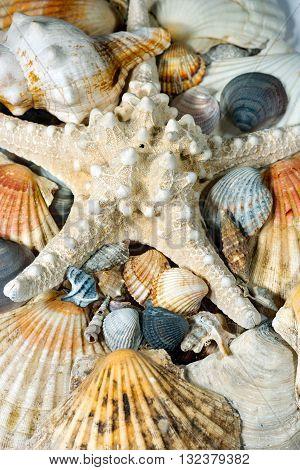 Macro photo of a group of seashells with a white starfish. Seashells background