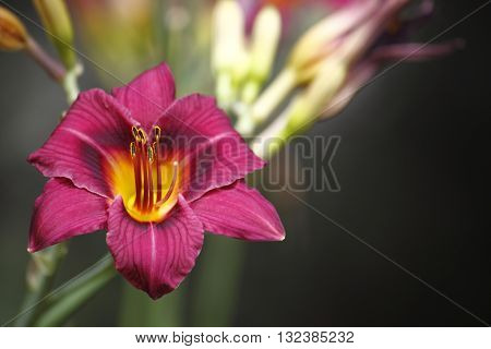 This is a beautiful pink flower in bloom