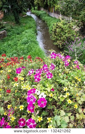 Flowers in bed and creek in the city park. Schwabach Bavaria Germany. Beautiful flowers. Street decoration. Seasonal natural scene. Flowing water.