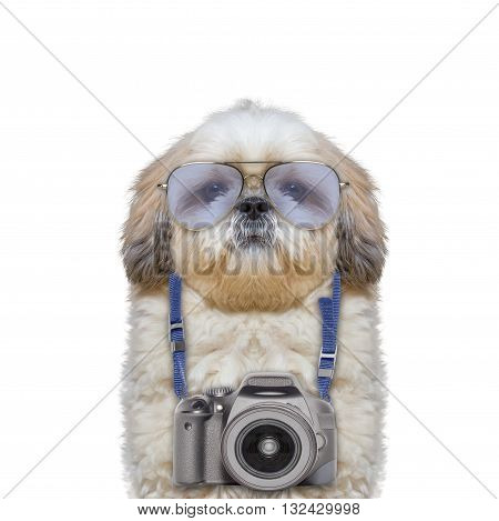 camera hanging around the dogs neck -- isolated on white