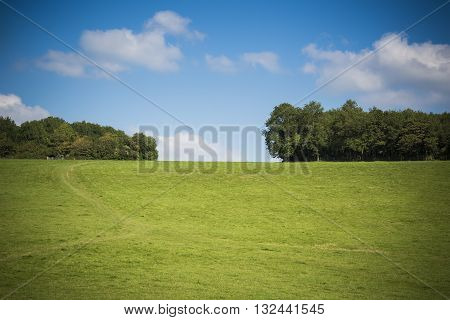Blue sky green grass on sunny day