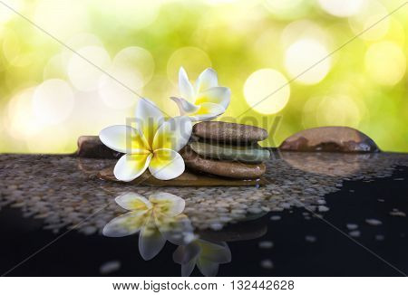 White And Yellow Fragrant Flower Plumeria Or Frangipani On Water And Pebble Rock For Spa Meditation
