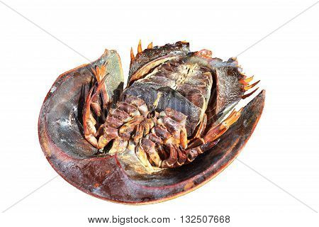 Isolated horseshoe crab up-side down in white background