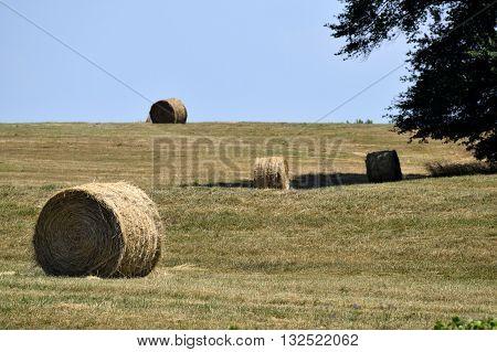 Bales of hay landscape background rural Georgia, USA
