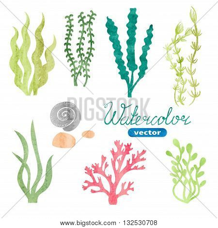 Set of watercolor seaweed, corals and stones isolated on white background. Underwater watercolor algae set. Aquarium plants collection. Vector marine life.
