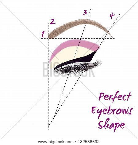Perfect eyebrow shape. How to create perfect eyebrow. Vector illustration.