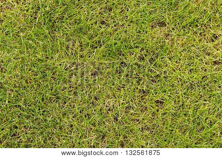 Sloping green lawn. Sloping green lawn, closeup top.