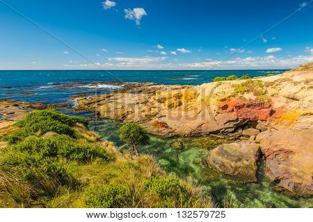 New Zealand colorful coastline landscape with fur seals at Otago Region Southern island New Zealand - full frame and circular polarizing filter
