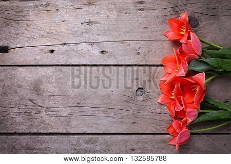 Border from coral tulips on vintage wooden background. Selective focus. Place for text. Flat ley floral still life.