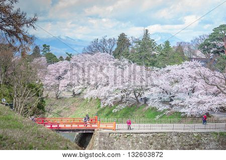 FUKUSHIMA JAPAN - APR 15 2016:Tsuruga Castle surrounded by hundreds of sakura trees