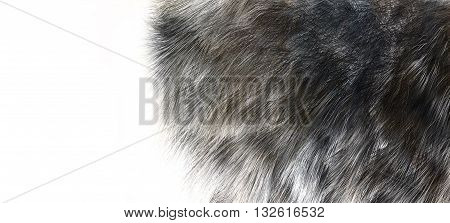 Wolf skins texture - close-up 3D rendering. Fashion element design.