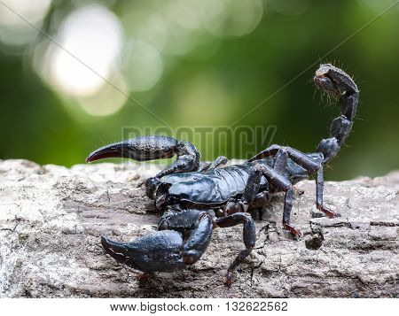Close up view of a scorpion in nature.